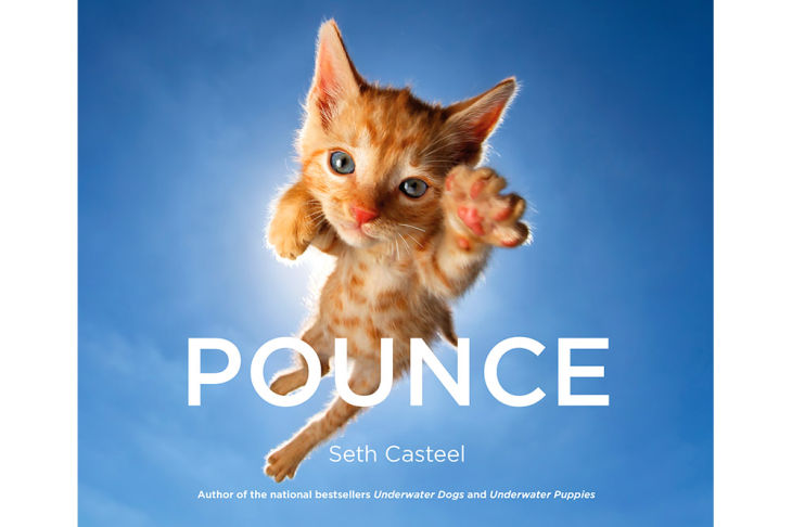 1 pounce cat kitten photographs seth casteel coffee table book