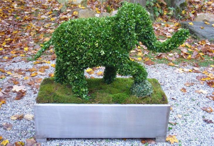 19 animal shaped topiary